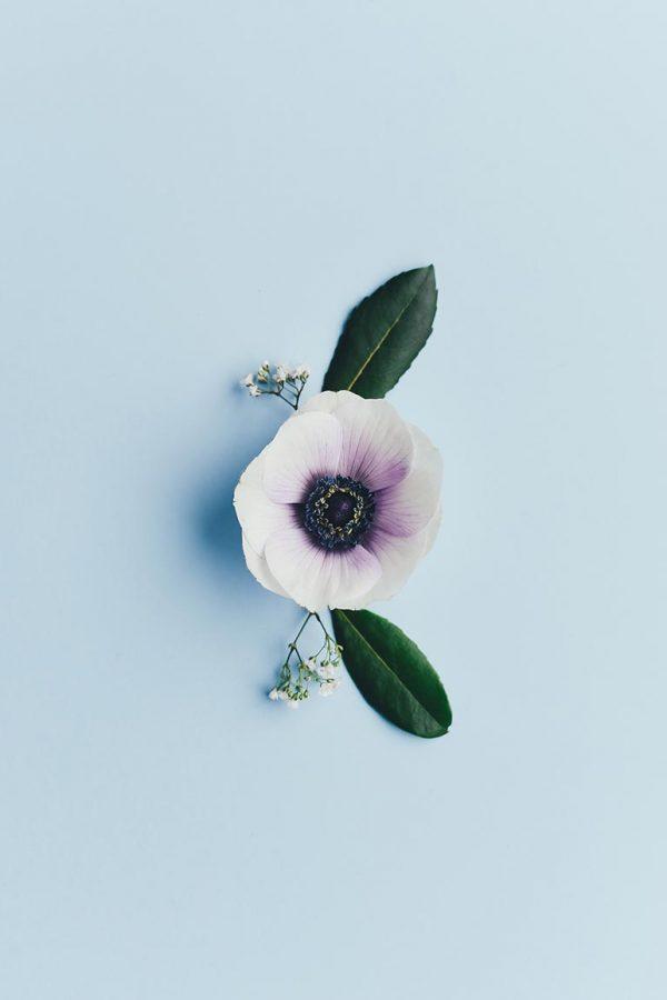 flower-1